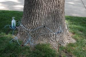 Tree Injection Pics-2014 006